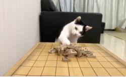 【話題】将棋倒しができる猫が可愛い