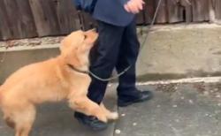 「大好き大好き」お散歩中に抱きついてくるワンちゃんが可愛すぎる!