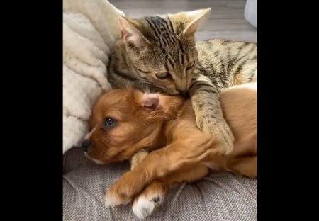 【犬とネコ】このカップルのラブラブ度が想像以上で嫉妬レベルの可愛さ