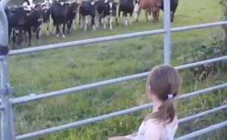 【牧場の小さな演奏会】美少女が演奏をはじめると、、集まってきてじーっと聴き入る牛さんたち