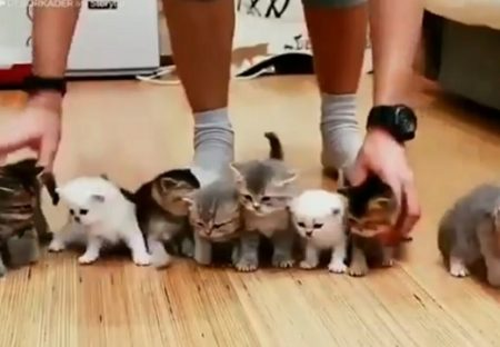 【わちゃわちゃ】子猫がたくさん☆可愛すぎて永遠に見ていられる
