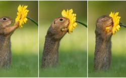 【まるで童話の世界】リスがたんぽぽの香りに癒されている表情にネット民ほんわか