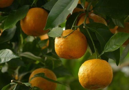 【天然の癒やし】オレンジの精油が入ったドイツ発 自然派ブランド「クナイプ」ハンドクリーム。べたつかないのに癒される香りですっごく落ち着く