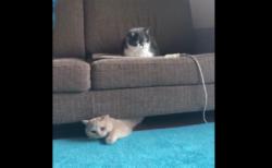 【癒やし】正月太りで隙間から出られない猫ちゃんが可愛すぎる!