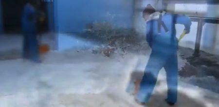 【セイウチ】おたる水族館式の「雪かき」が豪快すぎる。一瞬で終わった!