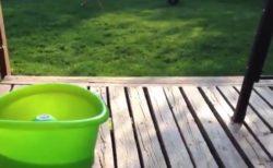 【癒やし】ひとりで「ボール遊び」をするゴールデンくんが賢すぎる!