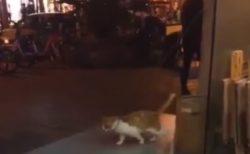【癒やし】ムーンウォーク練習中の猫ちゃんに遭遇。上手すぎるでしょ!