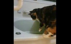 【癒やし】お風呂の「お湯」を抜くことに必死なネコちゃんが笑える!