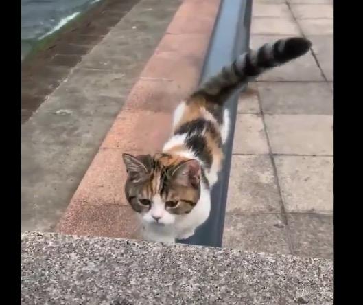 【凄い】颯爽と手すりの上を歩く猫ちゃん。バランス感覚が凄いな!