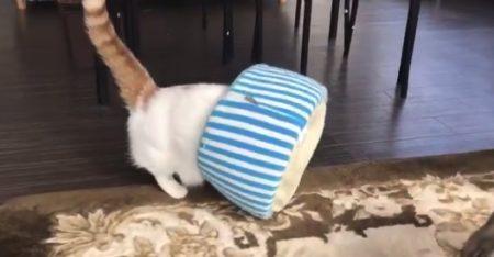 """【液体】うちの猫が狭いところへ """"効率的に入る方法"""" を編み出したようです。"""