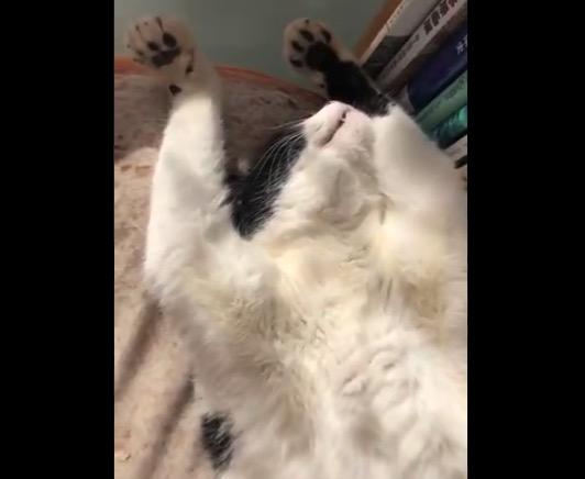 【ダラダラ】仕事用デスクの上で大胆に眠る猫ちゃん。なかなかの光景である!