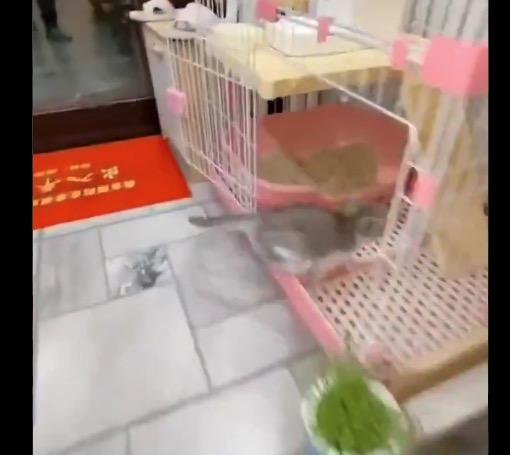 【自動給餌器】エサが出てくる「音」で駆けつける子猫ちゃん。めっちゃ速い!