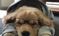 【勉強】レトリバー君「明日のテスト、、、もういいか!」