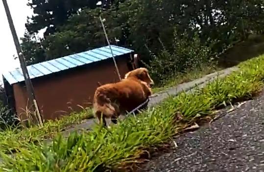 【悲しみ】散歩中に飼い主が倒れたときのワンコ。スタスタと行ってしまう・・・