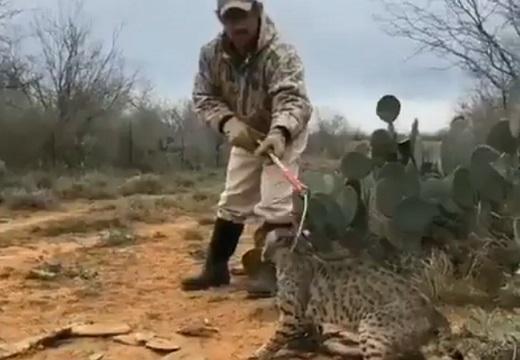 【やさしい】ネット「動物虐待!?酷い!」豹「もうだめだ食われる」→25秒後:ネット「いい人だった‥」豹「?!」「ミー」