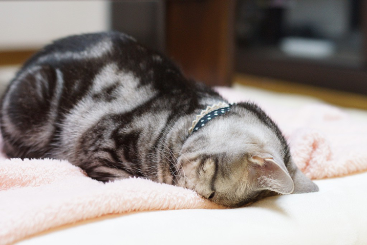 【癒やし】ネコ界で話題の「ごめん寝」と呼ばれる寝相が話題に。可愛すぎる!