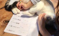 【優しい世界】娘が宿題を嫌だと言わないのは猫達のおかげ