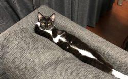 【ぴったり】ソファーの隙間に「ジャストフィット」する猫ちゃんが話題に!
