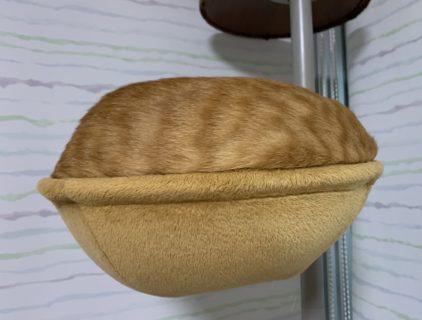 【擬態】どら焼き?鈴カステラ?あなたはこの「猫」が何に見える?