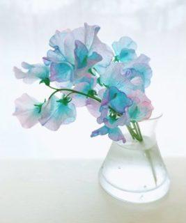【ふつくしい・・・】キラークイーンという花をご存知だろうか