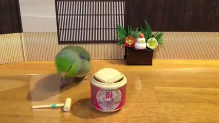 【動画】インコのお正月が可愛すぎるとネットで話題!