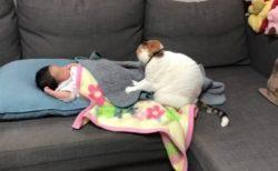 【動画】ベテランおばさん猫のマッサージをうける人間の赤ちゃん、気持ち良さそうだ