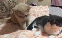 【動画】ベッドの上でにゃんにゃんする最高の時間をご覧ください
