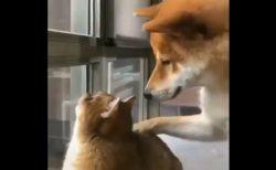 【癒やし】鳥を見つけて興奮してる猫にそっと寄り添う犬。ワンコの目が優しすぎる