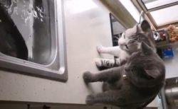 【うわぁ!!】大きな魚に興味津々のネコ2匹、思わぬ展開に・・・