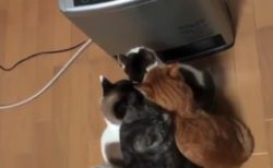【未来】ネコがこたつで丸くなる時代は終わりました。古いです!