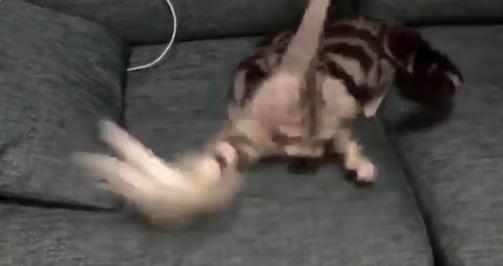 【ジタバタ】ハンターとしての才能がまるで「ゼロ」なうちの猫ちゃん。