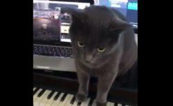 【鍵盤】ピアノの上に乗っかる猫ちゃん。音が怖いよ!