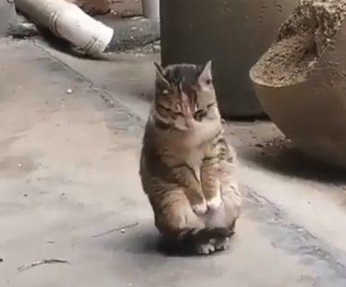【癒やし】寒そうな中、毛づくろいをする猫ちゃんの尊さがやばい・・・