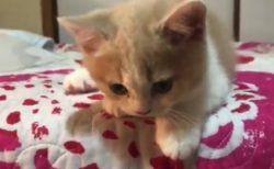 【癒やし】近寄ってきて「可愛い声」で話しかけてくる猫がたまらん!