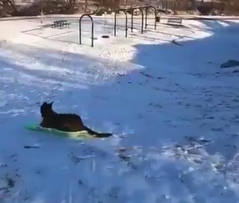 【雪】ソリの「遊び方」を知ってしまった犬くん、おおはしゃぎ!