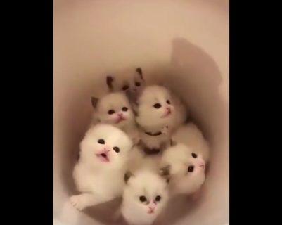 【猫】可愛いがたくさん詰まった「バケツ」が最高すぎる!