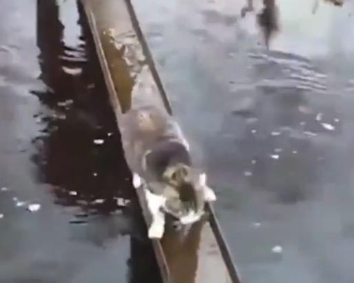【天才】足を濡らしたくない猫ちゃんがとった「行動」がこれだ!
