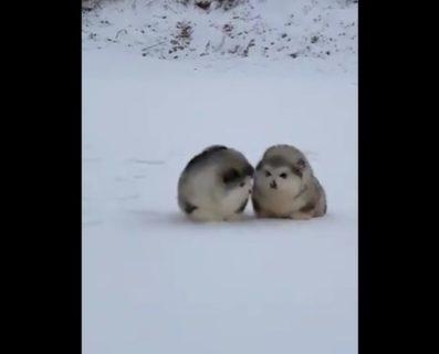 【コロコロ】はじめての雪にテンション上がりまくるワンコが可愛すぎる!