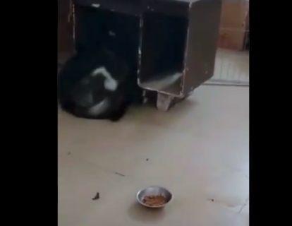 【ニャンコ強し】犬 VS 猫の戦いが記録された映像!