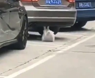 【トレーニング】腹筋をする猫が目撃される。めっちゃ鍛えてる・・・