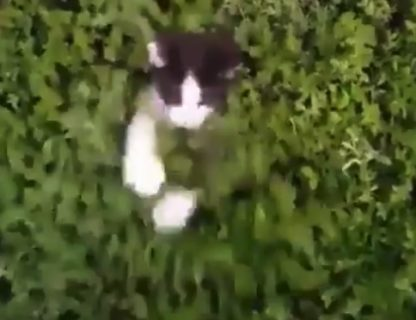 【こっそり】茂みの中に潜んでいる猫ちゃんたちが可愛すぎる!