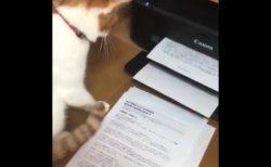 【ビクビク】プリンターに興味津々な猫ちゃん。おっかなびっくり!