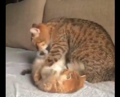 【猫の日】猫の親子の「様子」が最高すぎる。明日から仕事頑張れるぞ!