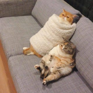 猫スシロールをご覧ください!