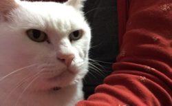 この猫の目ヂカラが凄い!