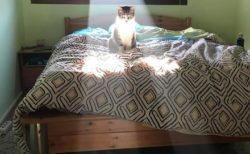 【2月22日は猫の日】それではここであまりにも神々しい「猫ちゃん」をご覧ください!