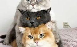 「にゃんこ3兄弟」 をご覧ください