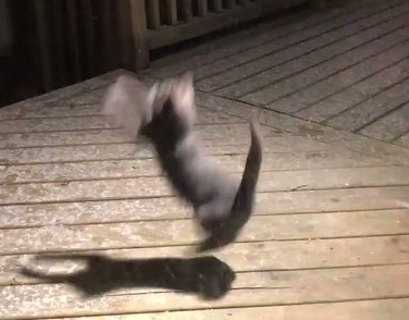 【大はしゃぎ】雪降るのを初めて見た猫が元気いっぱい