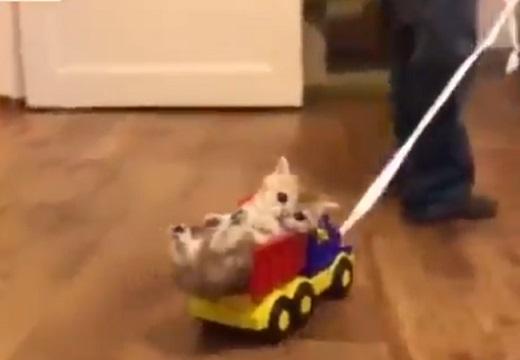 【動画】おもちゃのトラックにすっぽり入っちゃってる子猫とひっぱる男児。みんなかわいい