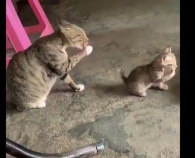 完全に動きが一致している猫の親子。奇跡のシンクロ!